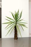 Mini palm close up Stock Photo