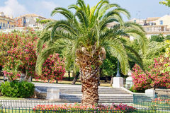 Mini palm tree in a park of Greece Stock Photos