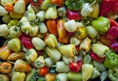 Mini peperoni dolci 2 immagine stock