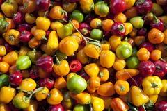 Mini peperoni dolci fotografie stock libere da diritti