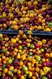 Mini peperoni dolci immagini stock libere da diritti