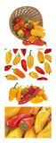 Mini peperoni dolci Immagine Stock Libera da Diritti