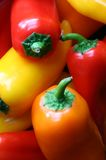 Mini Peppers. Closeup of colorful red, yellow and orange mini-peppers royalty free stock photo