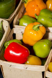 Mini Peppers. At Farmers Market in Grand Haven Michigan in little containers stock photos