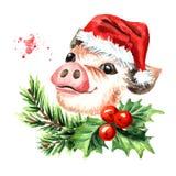 Mini Pig avec le chapeau de Noël et la composition en baie de houx Symbole de l'an neuf Illustration tirée par la main d'aquarell Photographie stock