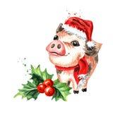 Mini Pig dans le chapeau de Noël et avec la baie de houx Symbole de la nouvelle année 2019 illustration tirée par la main d'aquar illustration de vecteur