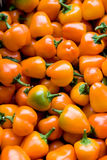 Mini pimentas alaranjadas Imagens de Stock Royalty Free