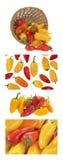 Mini pimentas doces Imagem de Stock Royalty Free