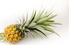 Mini Pine Apple Royalty Free Stock Photography