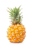 Mini pineapple Royalty Free Stock Photo