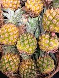 Mini Pineapples da vendere Immagini Stock