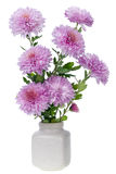 Mini pink chrysanthemums flowers Stock Photo