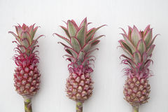 Mini Pink Pineapples stock afbeeldingen