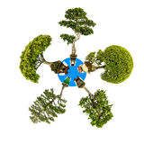 Mini Planet five different bonsai trees Royalty Free Stock Photography