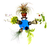 Mini planet with five different plants Stock Photo
