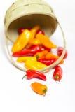 Mini poivrons colorés Photographie stock