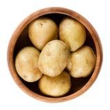 Mini pommes de terre crues dans la cuvette en bois au-dessus du blanc Photos libres de droits