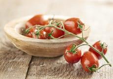 Mini pomodori della vite di san Marzano Immagine Stock