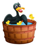 A mini pool with a duck and her ducklings Stock Photos