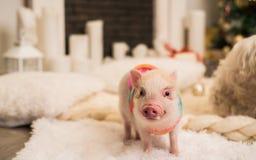 Mini porco cor-de-rosa dentro, focalizado em parte fotos de stock