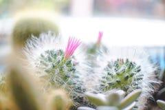 Mini Powder Puff Pincushion met roze bloeminstallatie op de pot stock afbeeldingen