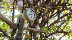 Mini prysznic drzewna maszyna z natury tłem Zdjęcie Royalty Free