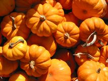 Free Mini Pumkins Royalty Free Stock Image - 416536