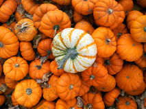 Mini pumkins blancs et oranges Image stock