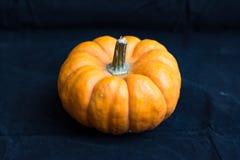 Mini Pumpkin Lizenzfreies Stockfoto