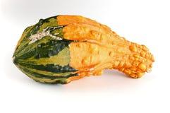 Mini pumpkin. On white background Royalty Free Stock Photos