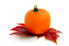 Mini pumpkin Stock Image
