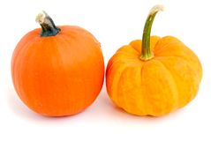Mini pumpkin Stock Photography