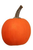 Mini pumpkin Royalty Free Stock Image