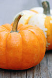 Mini Pumpkin Stock Images