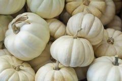 Mini Pumpkin Royalty-vrije Stock Foto's