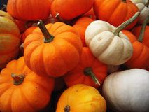 Mini Pumpkin Fotografia Stock Libera da Diritti