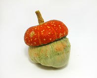 Mini Pumpkin Stockbild