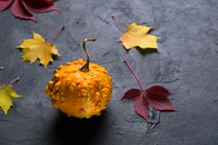 Mini pumpkin and autumn colorful leafs on dark background. Mockup for seasonal offers and holiday post card. Mini pumpkin and autumn colorful leafs on dark stock images