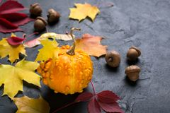 Mini pumpkin and autumn colorful leafs on dark background. Mockup for seasonal offers and holiday post card. Mini pumpkin and autumn colorful leafs on dark royalty free stock images