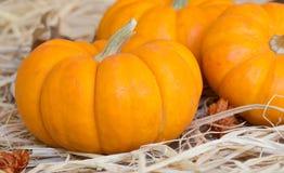 Mini Pumpkin Closeup Royalty Free Stock Images