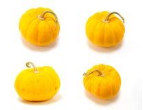 Mini pumpkin Stock Images
