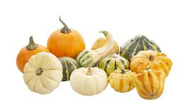 Mini Pumpkins Isolated on a White Background. Mini Pumpkin collection Isolated on a White Background stock photography