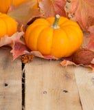 Mini Pumpkin Royalty Free Stock Images