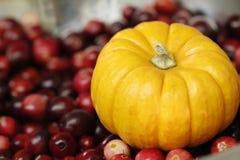 Mini Pumpkin on Cranberries Royalty Free Stock Photo