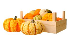 Mini pumpkin in crate Royalty Free Stock Photo