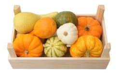 Mini pumpkin in crate Royalty Free Stock Image