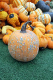 Mini pumpkin and gourd squash Royalty Free Stock Image