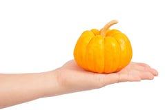 Mini pumpkin Royalty Free Stock Photography