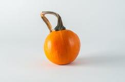 Mini Pumpkin Royalty Free Stock Photo