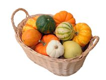 Mini pumpkin and squash Royalty Free Stock Images